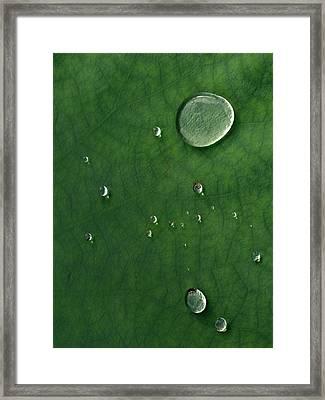 Droplet Of Life Framed Print