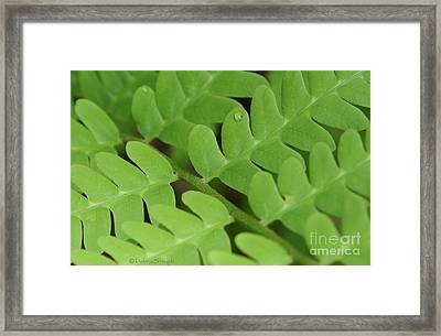 Droplet On Fern Framed Print by Debra Straub