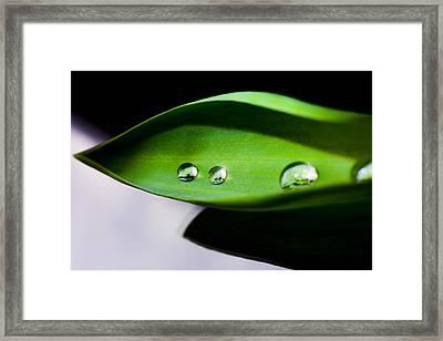Droplet On Green Leaf  Framed Print by Tommytechno Sweden
