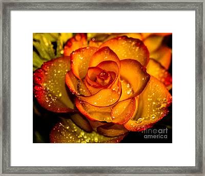 Droplet Rose Framed Print