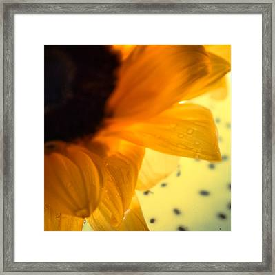 Framed Print featuring the photograph Droplets by Bobby Villapando