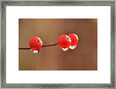 Droplets Framed Print by Nancy Landry