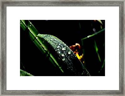 Droplets Of Water Framed Print by Robert Scauzillo