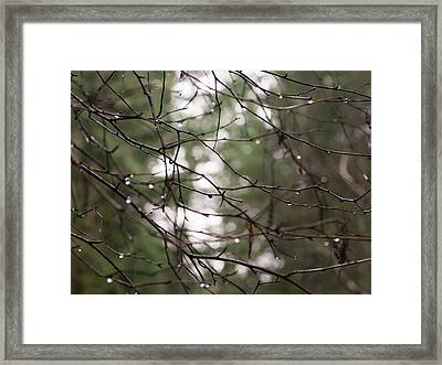 Droplets On Branches Framed Print