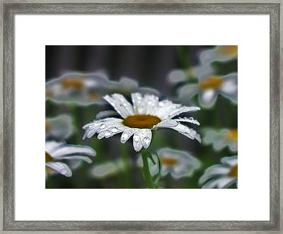 Droplets On Daisies Framed Print by Emily Michaud