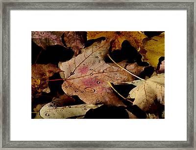 Framed Print featuring the photograph Droplets On Fallen Leaves by Doris Potter