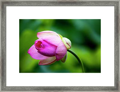 Framed Print featuring the photograph Droplets On Lotus by Edward Kreis