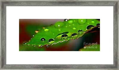 Droplets On Rose Leaf By Kaye Menner Framed Print by Kaye Menner