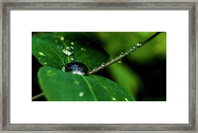 Framed Print featuring the photograph Droplets On Stem And Leaves by Darcy Michaelchuk
