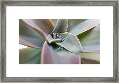 Droplets On Succulent Framed Print by Ian Kowalski