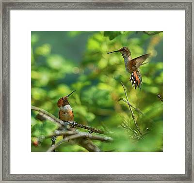 Dropped In Framed Print by Sheldon Bilsker