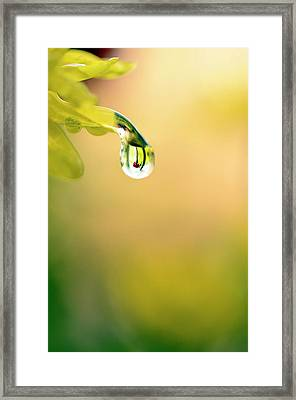 Drops Of Colorful Reflection Framed Print by Laura Mountainspring