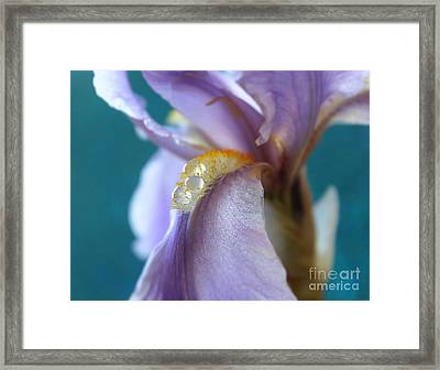 Drops Of Faith Framed Print