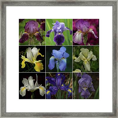 Drops Of Iris -- A Collage Framed Print by Richard Cummings