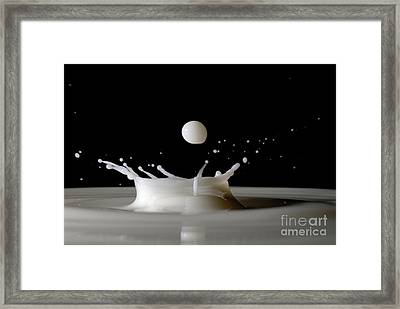 Drops Of Milk Splashing Into The Air Framed Print by Sami Sarkis