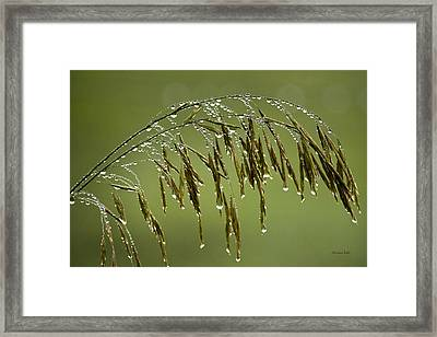 Drops Of Water On Grass Framed Print by Christina Rollo