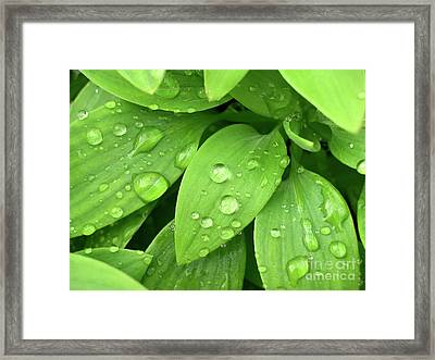 Drops On Leaves Framed Print