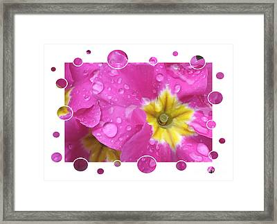 Bubbly Pink Raindrops  Framed Print by Carol Groenen