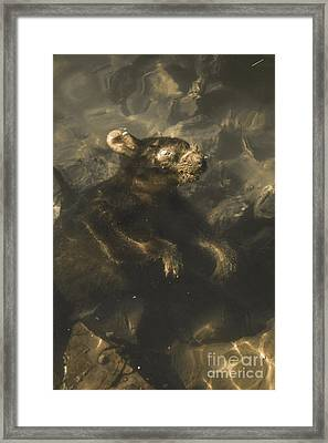 Drowned Tasmanian Possum Framed Print by Jorgo Photography - Wall Art Gallery