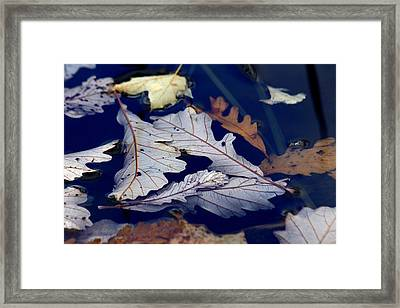 Framed Print featuring the photograph Drowning In Indigo by Doris Potter