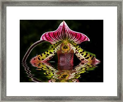 Drowning Orchid By Jean Noren Framed Print by Jean Noren