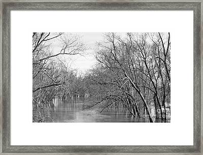 Drowning Trees Framed Print by Lee Alexander