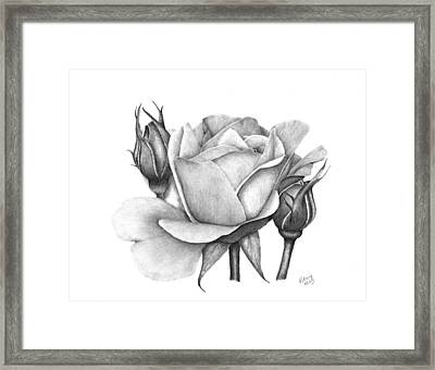 Drum Rose Framed Print by Patricia Hiltz