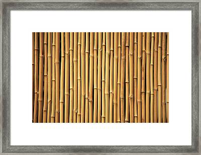 Dry Bamboo Rows Framed Print by Brandon Tabiolo - Printscapes
