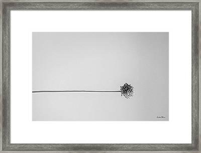 Dry Flower - Black And White Art Photo Framed Print