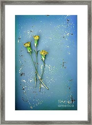 Framed Print featuring the photograph Dry Flowers On Blue by Jill Battaglia