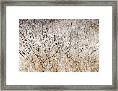Dry Grasses And Branches. Framed Print by Rob Huntley