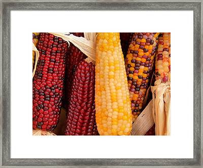 Dry Indian Corn Framed Print by Jeff Lowe