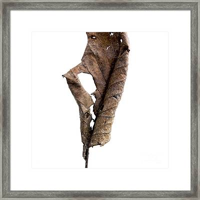 Dry Leaf Framed Print by Bernard Jaubert