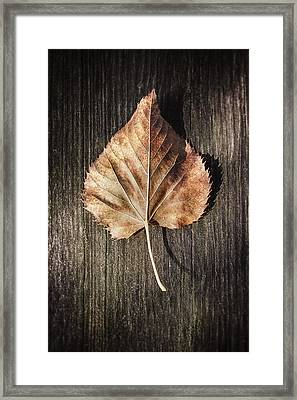 Dry Leaf On Wood Framed Print