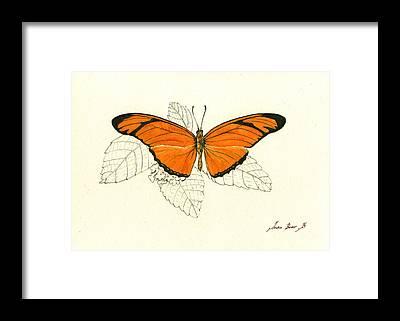 Gulf Fritillary Framed Prints
