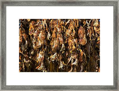 Drying Fish Heads - Iceland Framed Print by Stuart Litoff