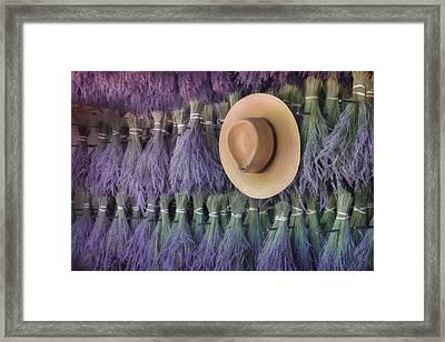 Drying Lavender Framed Print by Lori Deiter