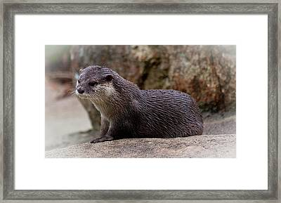 Drying Off Framed Print by Heather Thorning