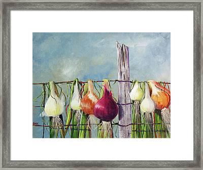 Drying Onions Framed Print