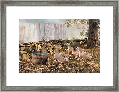 Framed Print featuring the photograph Drying Out by Robin-Lee Vieira