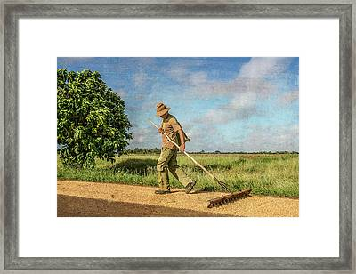 Framed Print featuring the photograph Drying Rice by Lou Novick