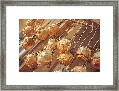 Drying Roses Framed Print