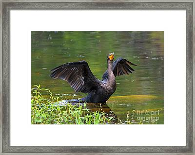 Drying Time Framed Print by Mike Dawson
