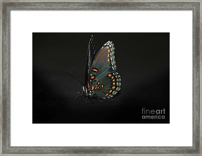 Drying Wings Framed Print by Judy Hall-Folde