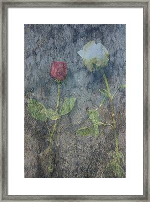 Duality Framed Print by Jim Cook