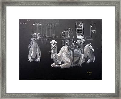 Dubai Camels Framed Print