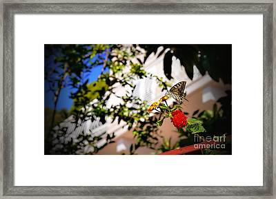 Dubrovniks Butterfly Framed Print