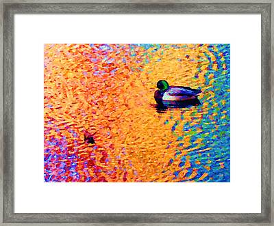 Duck A L'orange Framed Print
