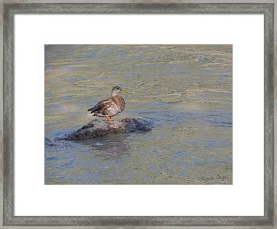 Duck Alone On The Rock Framed Print
