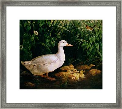 Duck And Ducklings Framed Print by English School